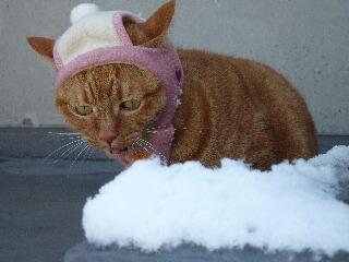 綿帽子猫 しぇる編。_a0143140_19323548.jpg