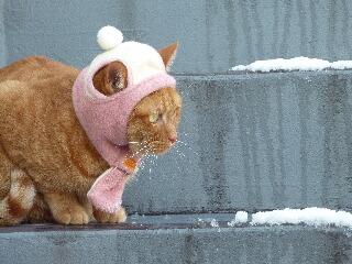 綿帽子猫 しぇる編。_a0143140_19352891.jpg