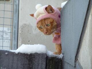 綿帽子猫 しぇる編。_a0143140_1936297.jpg