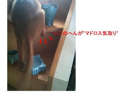 b0169545_1212054.jpg