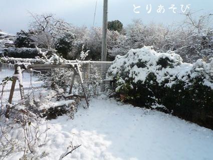 雪だ 積もった 真っ白だーー!_e0147757_20483367.jpg