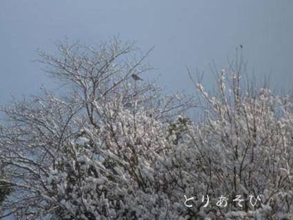 雪だ 積もった 真っ白だーー!_e0147757_205027.jpg