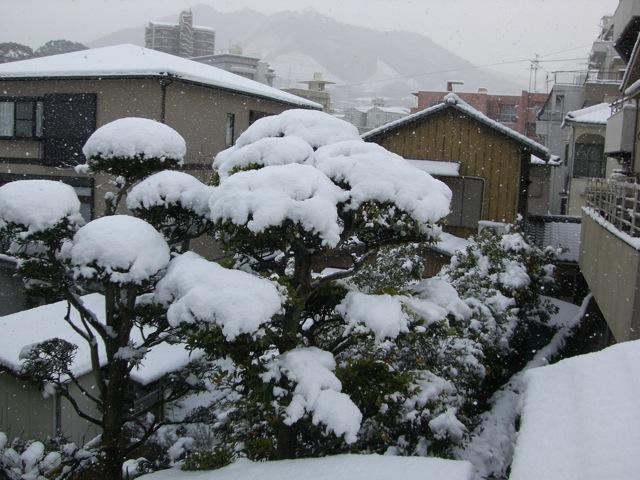 わぁ〜い雪だぁ!!!_d0052485_10113058.jpg