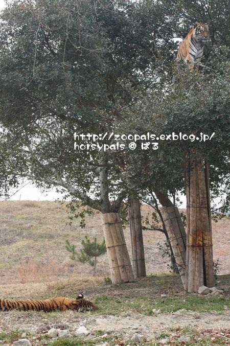 f0158697_21581011.jpg