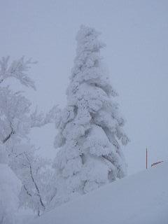 冬の遊び_f0105112_12391112.jpg