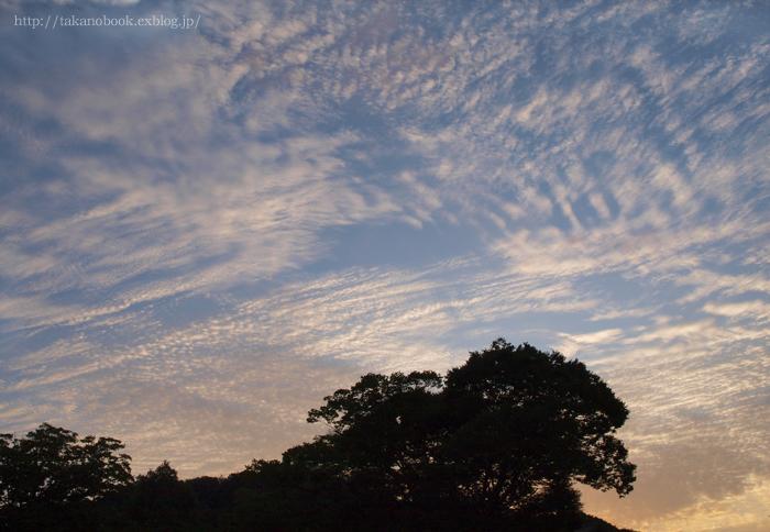 [takanobookcard vol.1] sora 2009-9-17_f0193425_1719531.jpg