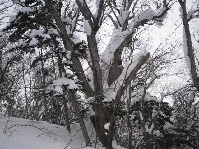 山登り 滑れるなら登る_e0173533_23541798.jpg
