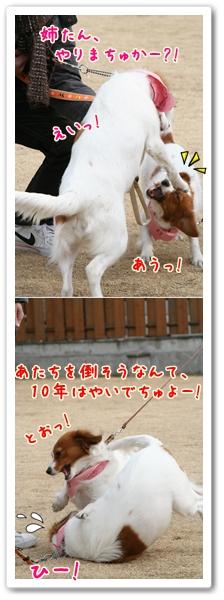 d0013149_11411322.jpg