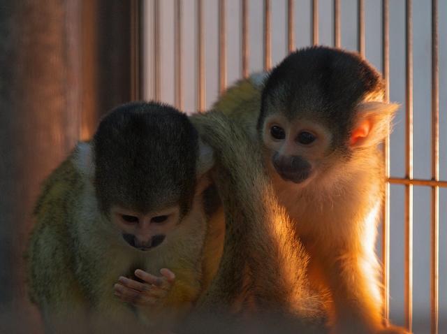 市川動物園 1_f0018464_745981.jpg