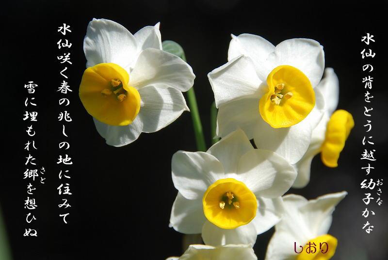 c0187781_10394318.jpg