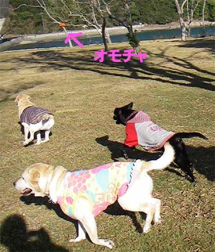 モニちゃん_b0145486_2035174.jpg