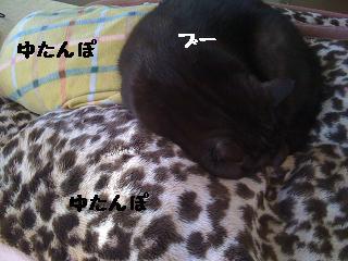 c0165498_961324.jpg