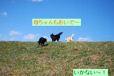 f0109202_17181959.jpg