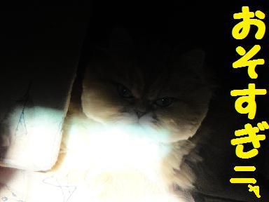 f0138304_95178.jpg
