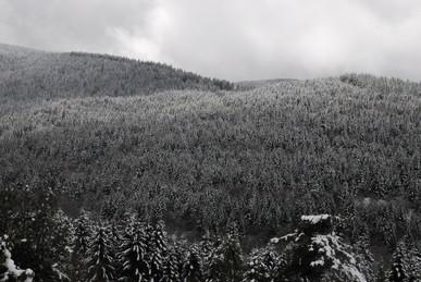 2009年冬、雪景色_c0219616_18345820.jpg