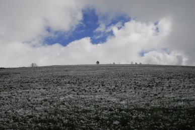 2009年冬、雪景色_c0219616_1835145.jpg