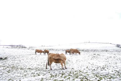 2009年冬、雪景色_c0219616_18352879.jpg