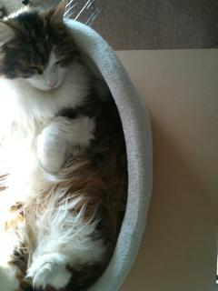 丸いベッドを伸ばして眠る_f0181924_024474.jpg
