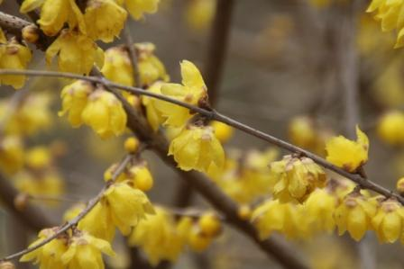 春の花_a0117168_932723.jpg
