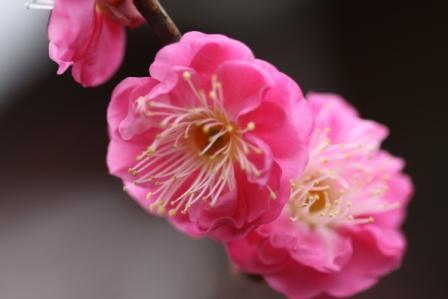 春の花_a0117168_935569.jpg