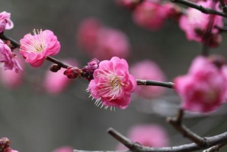 春の花_a0117168_94815.jpg