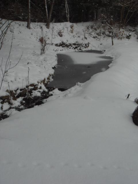 雪景色_a0080074_1022335.jpg
