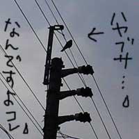 b0057675_21132458.jpg