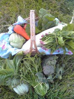 今日のお野菜_a0138985_1919823.jpg