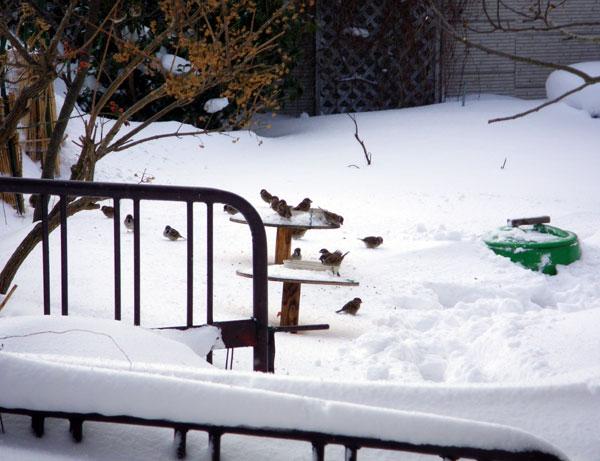 雪と花と_a0136293_11543735.jpg