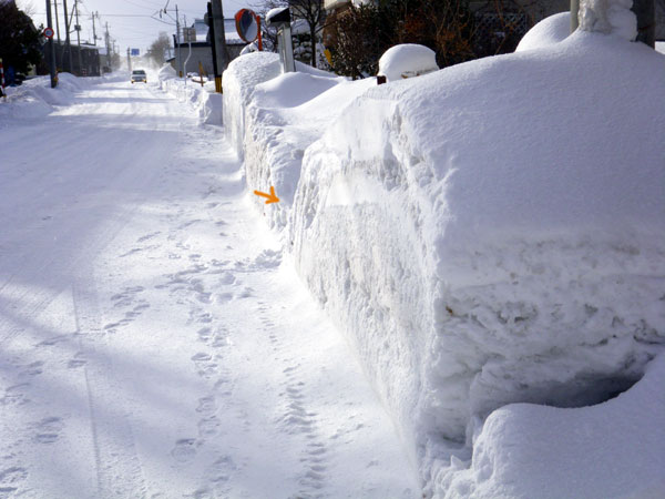 雪と花と_a0136293_11545967.jpg