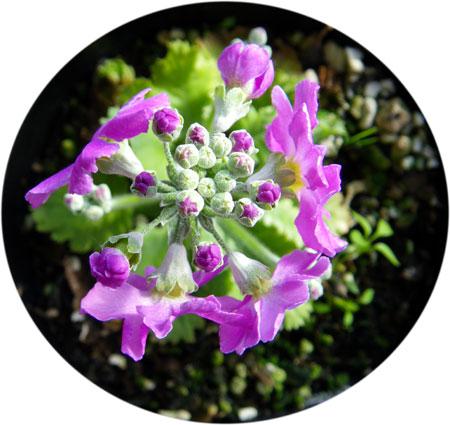 雪と花と_a0136293_11552047.jpg