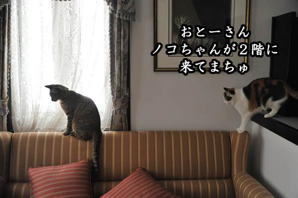 b0141397_11251332.jpg