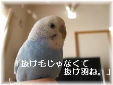 b0138506_21334911.jpg