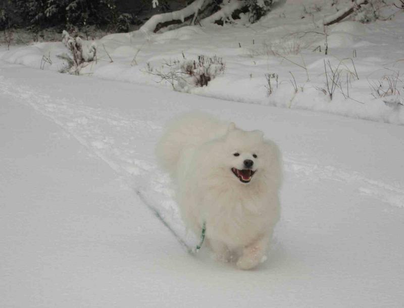 雪だよ~♪_b0177436_23253988.jpg
