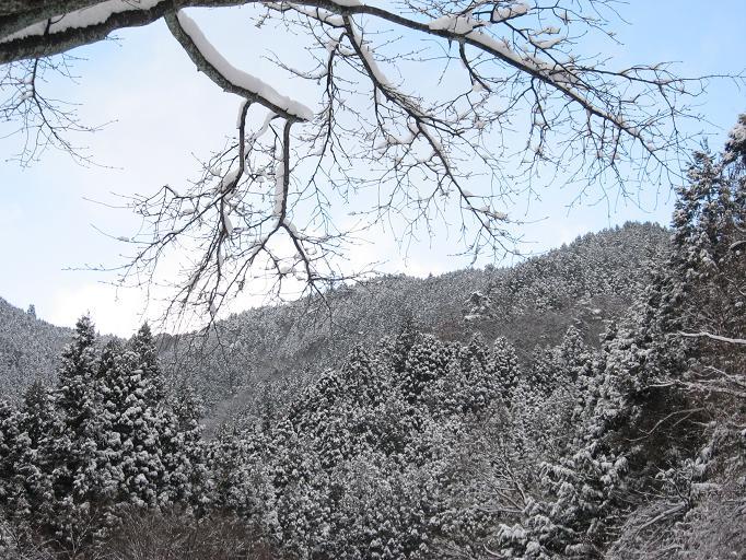 雪だよ~♪_b0177436_2326142.jpg