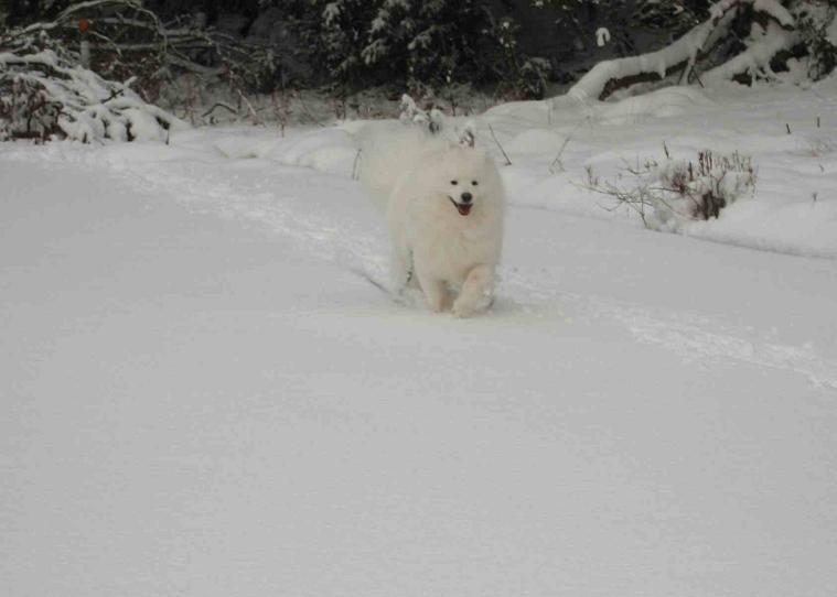 雪だよ~♪_b0177436_23272198.jpg