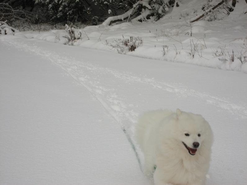雪だよ~♪_b0177436_23295663.jpg