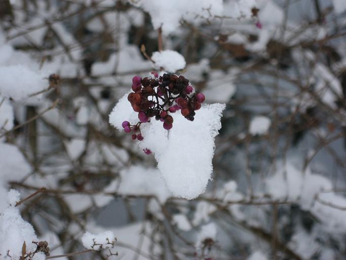 雪だよ~♪_b0177436_23304164.jpg