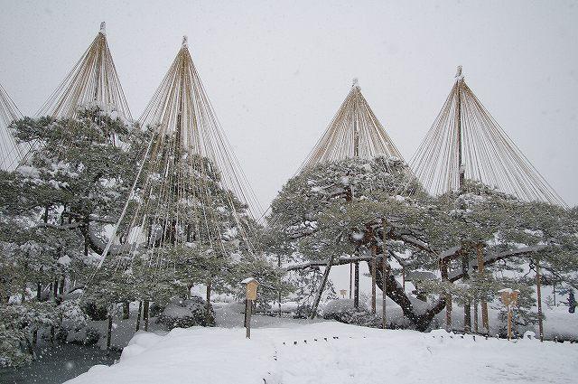 兼六園 雪吊り