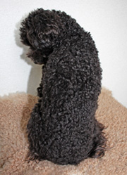 curly hair …_f0170352_12513355.jpg