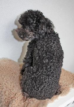 curly hair …_f0170352_13152362.jpg