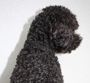 curly hair …_f0170352_1395412.jpg