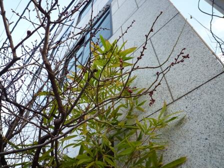 極寒の赤坂…_b0093660_205547.jpg