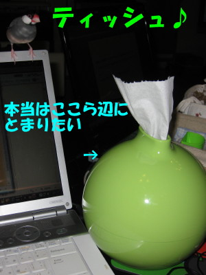 b0158061_212326.jpg
