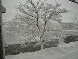 あっという間の雪景色です。_c0204368_1255299.jpg