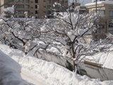 あっという間の雪景色です。_c0204368_12562688.jpg