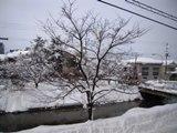 あっという間の雪景色です。_c0204368_12575480.jpg
