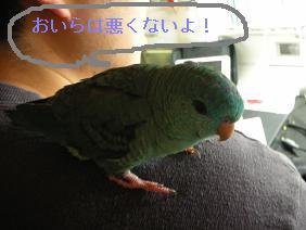 b0170669_1243568.jpg