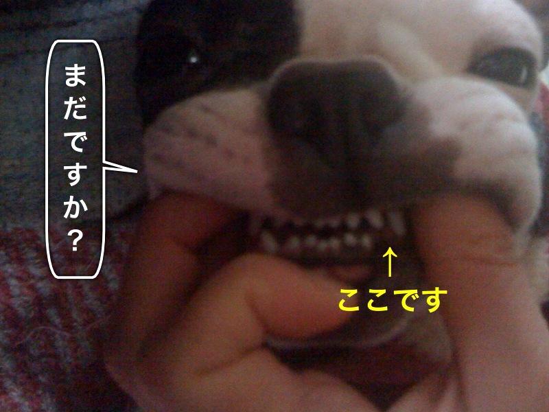 f0168374_1057066.jpg