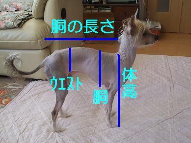 f0179203_1624151.jpg